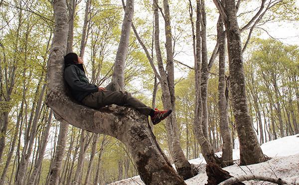 春、残雪トレッキング(ブナの芽吹きを見に行こう)【野沢温泉】